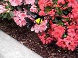 Jardin Botanique_Exposition des papillons en liberté