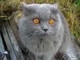 Говорящий Кот!Он сам в шоке!!!