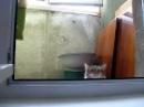 Кот-вуайерист