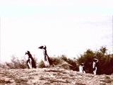 Balam Acab - See Birds (Sun)