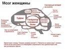 9:29, 12 мая 2011г.  Схема.  Nicolas P. 1. Мозг женщины.  0 комментариев.  Типичный женский мозг состоит из следующих...
