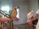 Ночь в Роксбери у попугаев