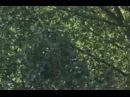 Прекрасная зелёная  La belle verte. Фильм