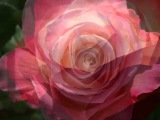Mon amie la rose - Natasha Atlas