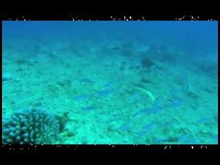 секс мировой океан под музыку шри чинмоя видео воспроизводится, попробуйте
