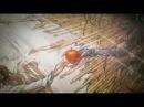 Death Note - Тетрадь Смерти - 1 сезон - 11 серия