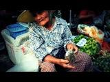 The Market (O Mercado)