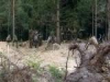 В Ленинградской области российско-немецкий поисковый отряд ищет погибших во Второй Мировой - Первый канал