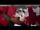 Anquan Boldin Knocked Out By Eric Smith - Cardinals vs Jets