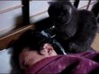 Янтани (кот) очень любит свого хозяина