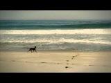 KAFFEIN feat. AL Jet - All That She Wants (MAKHNO PROJECT REMIX) HD