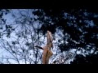 Удевительная ящерица бегающая по воде (HD)