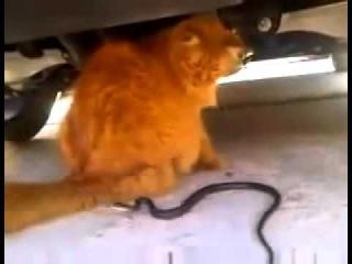Змея атакует КотЭ