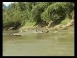 Азиатский карп сам запрыгивает в лодку рыбака