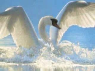 Н. Могилевська -Вiльний птах