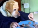 Dog Eating With Human Hands|Dog Eating With Fork and Knife at Table | Dog Eating With His Hands