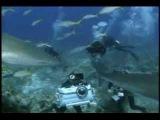 Ocean Men Extreme Dive