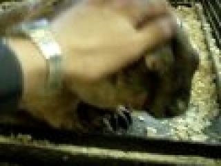 Пронзительный свист (крик) сурка. Marmot`s piercing screech