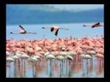 Flamingo music from Rachel Portman