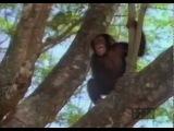 Tarzan - TV Series (1991) Opening Title Sequence