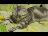 Котик резко уснул