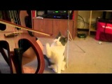 Cat mesmerized by cello