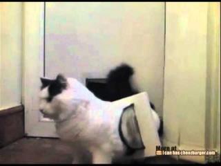 Жирный кот застрял в дверях