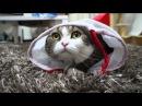 Неугомонный кот мару))
