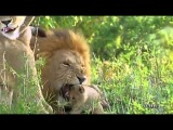 Cancion completa  de Disney Nature 2011 - The World I Knew - Dia de la Tierra