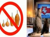 КатаКлизмы 2012 - Клизмы для котов отменяются...