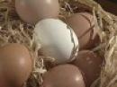 Яйца – полезны или нет - Доброе утро - Первый канал