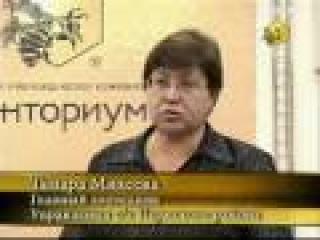 Промышленное пчеловодство в России будет. Инициатива компании Тенториум №1