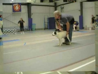 Just Flyball 2009