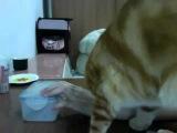 Кот просит открыть банку))