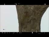Леопард – родовое дерево