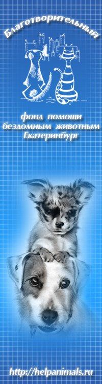Сбор макулатуры в помощь бездомным животным екатеринбург пункт приема картона одинцово
