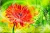 Зелёный уголок . Энциклопедия комнатных растений и цветов . Растения от А до Я .