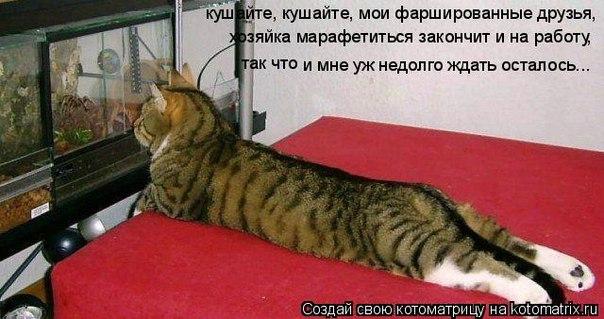 http://cs4929.vk.me/u136454729/151184947/x_c859e060.jpg