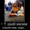 Для тех, кто хотел бы помочь животным, но не зна