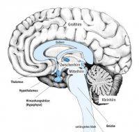 Мозги Нах, 19 января 1996, Углич, id92245894