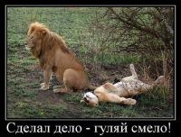 Вова Крашенинников