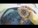 Horrifying Giant European Hornets built a nest in an El Camino