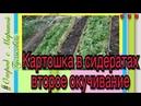 71). 17.05.2017-КАРТОШКА второе окучивание сидератами