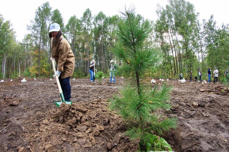 Китайская компания восстановит около 500 гектаров томского леса