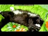 «Masya-Hindi-Matis and Tusya-Simba-Pushtu» под музыку смешарики - про кота). Picrolla