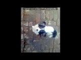 Моя собака))) под музыку Krec ft. Ассаи - Собака. Picrolla