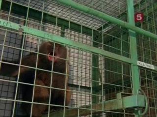 Борьба за выживание. Бабуины и человек - жизнь по соседству.1995.XviD.SATRip