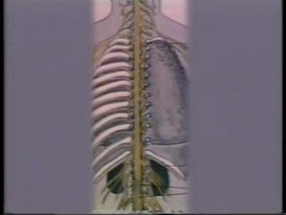 Анатомия и физиология человека. Фильм 2