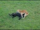 смотрите на белую собаку угар! В центральном парке 1 сентября ОРСК