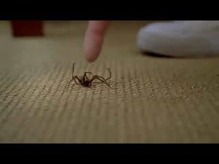 прикол с пауком,которых не зря так боятся